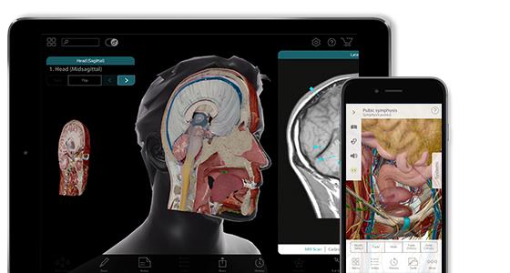 Cyfrowy atlas anatomiczny - Human Anatomy Atlas 2017 95% taniej @ Google Play