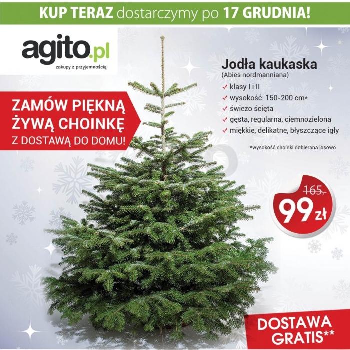 ŻYWA CHOINKA - jodła kaukaska 1,5-2m za 99zł (możliwe 79zł z kuponem!) DARMOWY DOWÓZ @ Allegro