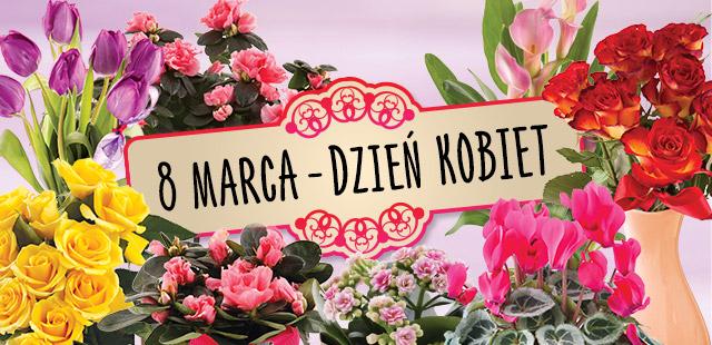 Kwiaty w niskich cenach na Dzień Kobiet @ Biedronka