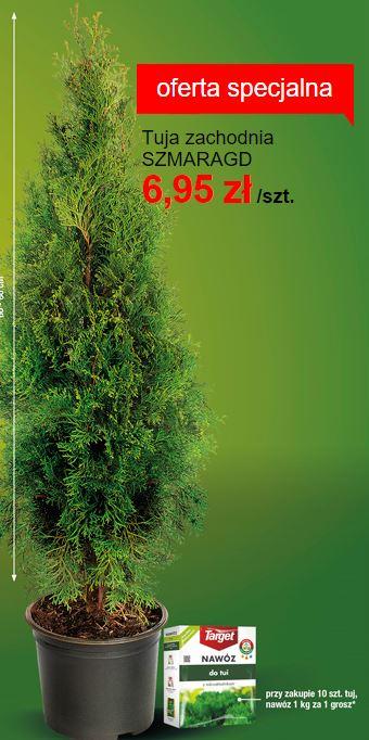 Tuja Szmaragd 60cm za 6,95zl  + Nawóz za 1 grosz!