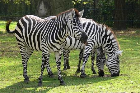 Bilety do Warszawskiego Ogrodu Zoologicznego 50% taniej! @ Groupon