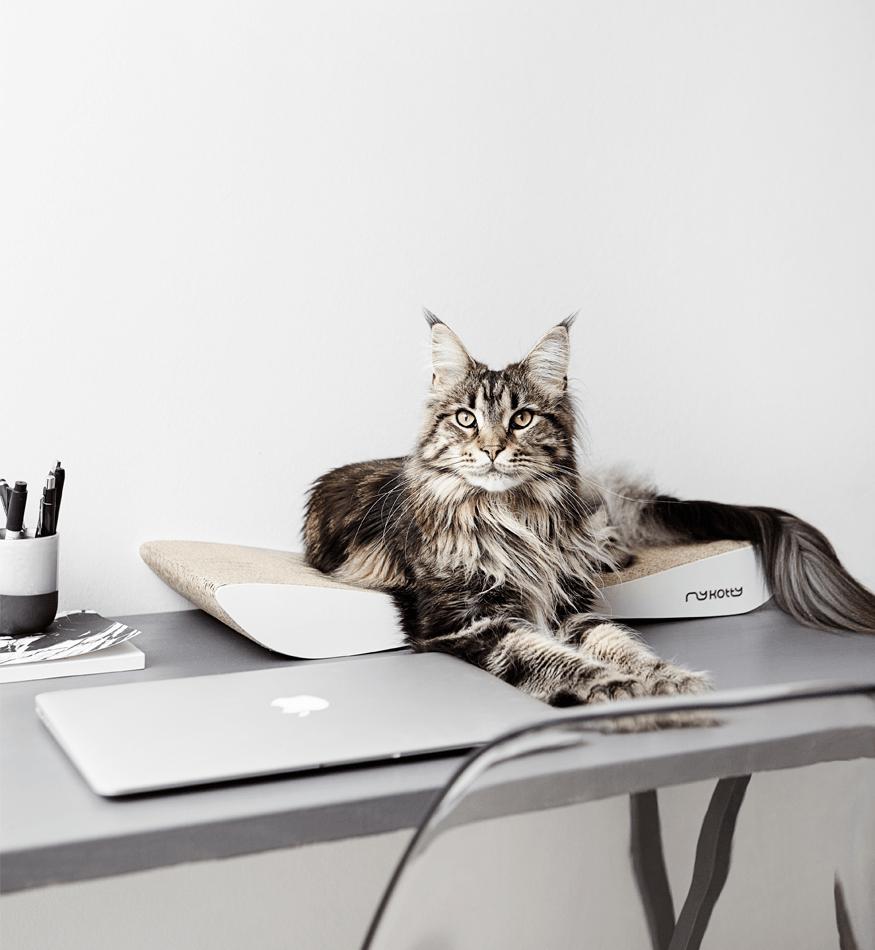 Nowoczesne meble dla kotów