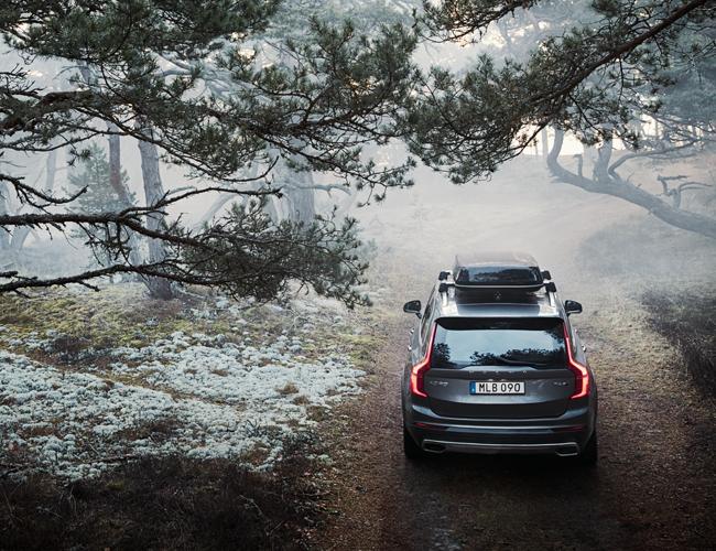 Wypożycz choinkę od Volvo, a zasadzą 10 kolejnych drzew!