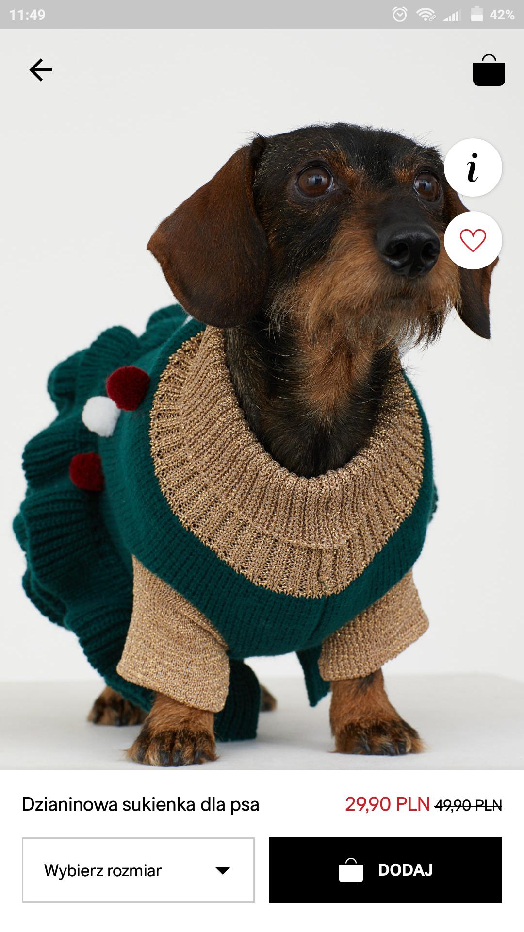Sukienka dla psa h&m ;)