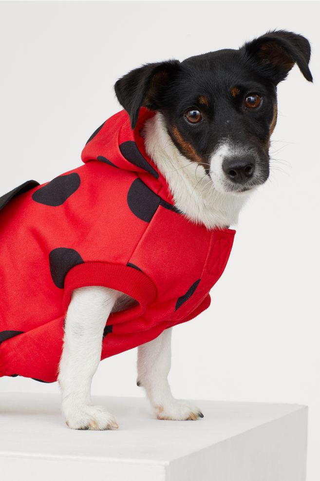 Kostium dla psa, ostatni krzyk mody