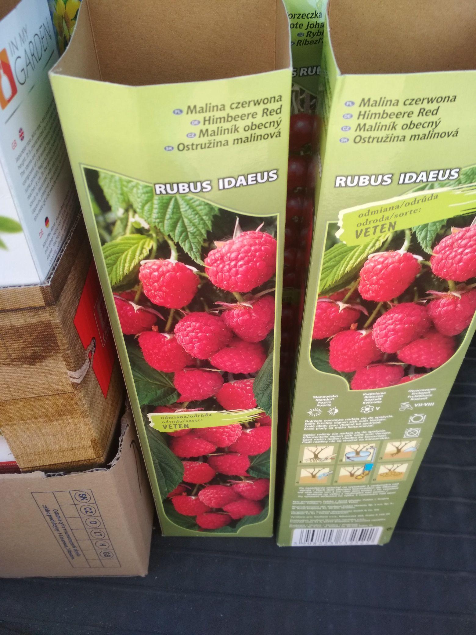 Krzewy owocowe kwiatki sadzonki po 1 zł Kaufland