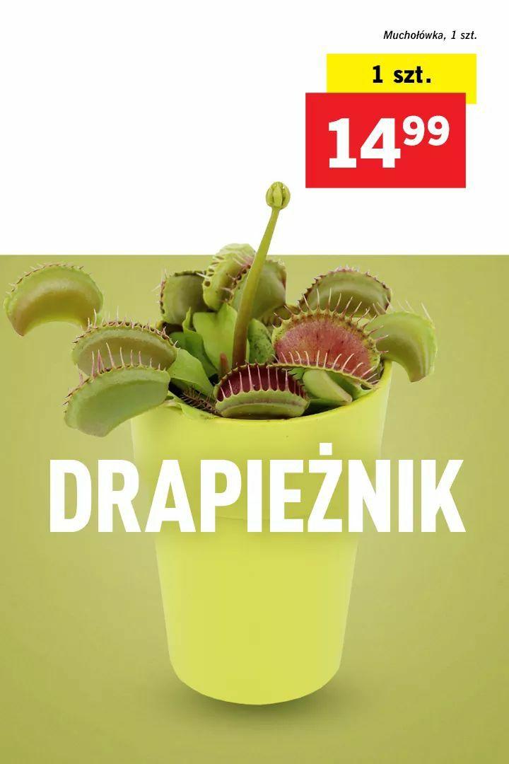 Muchołówka w Lidlu za 14.99 od 22.08