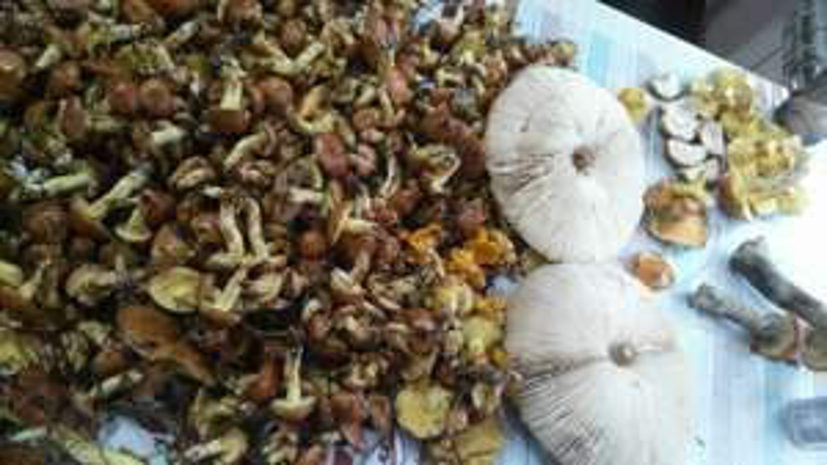 Darmowy e-book z przepisami na dania z grzybami
