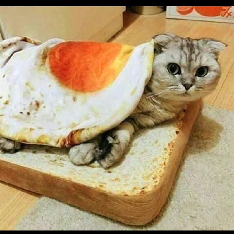 Kocyk dla kota o kształcie jajka :) Aliexpress $2,60