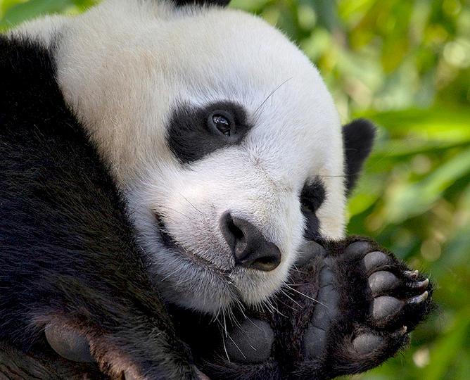 Zoo live cams - zwierzaki na żywo (online) #zostanwdomu
