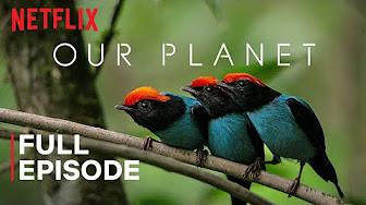 Filmy Netflixa za darmo na YouTube