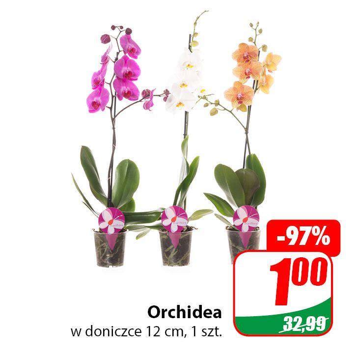 Kwiaty (Orchidea, Paprotka, Kalanchoe, Rozmaryn, Kwiat Zielony, Rośliny Tropikalne) - DINO
