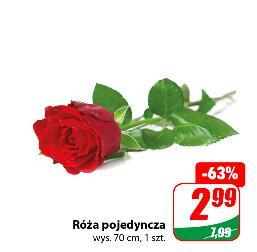 Róża pojedyncza wys. 70 cm szt. @Dino