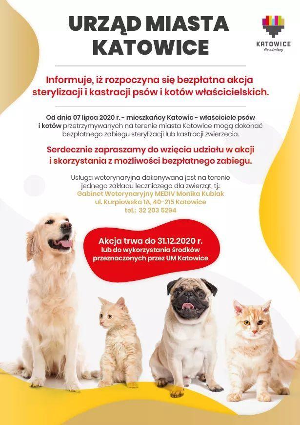 Bezpłatny zabieg sterylizacji i kastracji psów i kotów w Katowicach