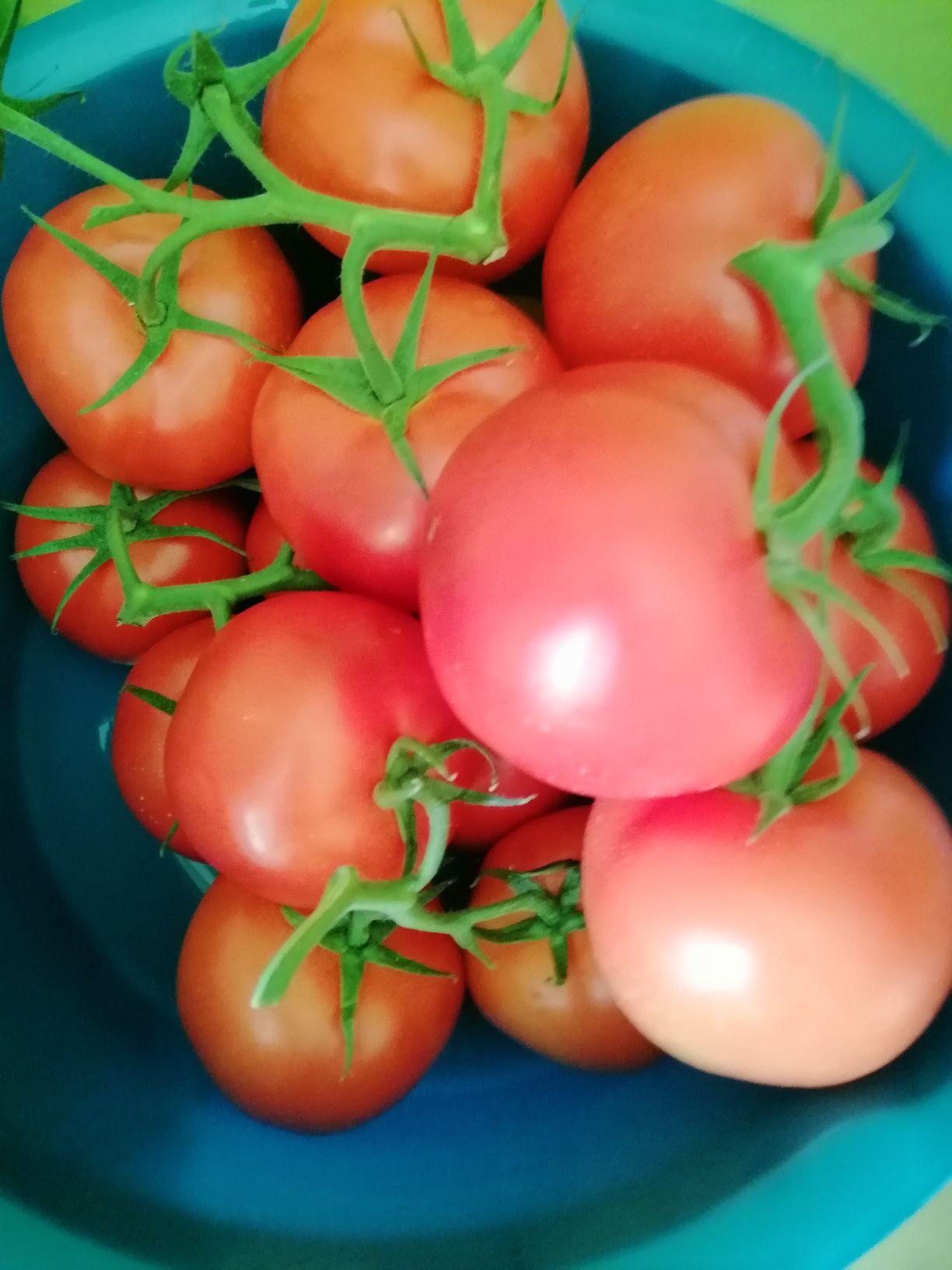 Pomidory Kaufland