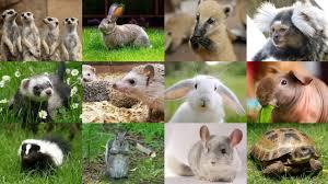 36% zniżki na bilet wstępu do Mini Zoo w Warszawie @ Groupon
