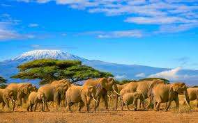 Tanzania z Europy od 1530PLN