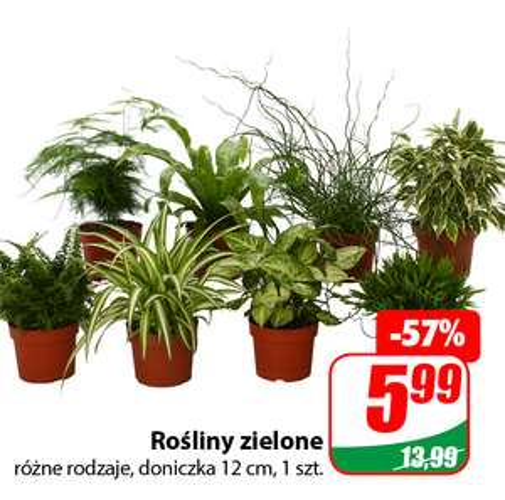 Rośliny Zielone (różne rodzaje) + Gardenia - DINO