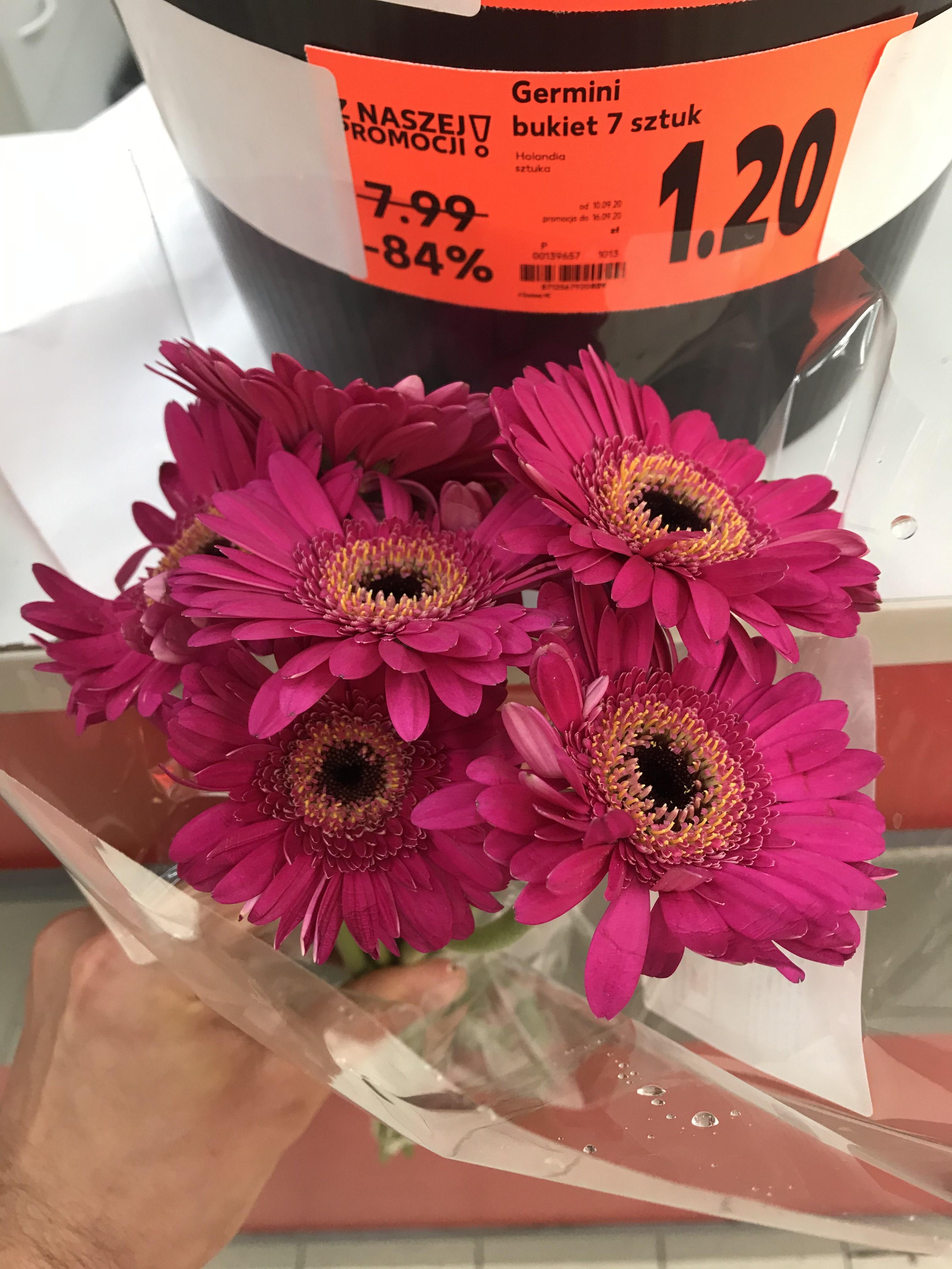 Kwiaty Germini 7 sztuk - Kaufland