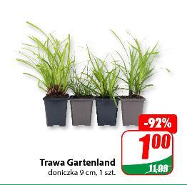 Trawa Gartenland 1 zł/szt.|Trawy Mix 3,99 zł/szt.|Rośliny zielone 3,99 zł/szt.|Krzewy 2,99 zł przy zakupie 2 szt.