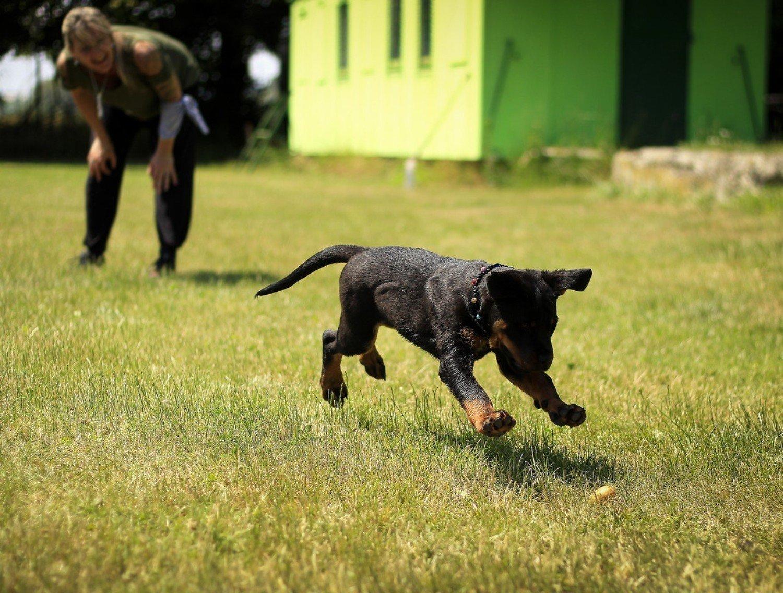 Świdnik - Darmowe woreczki na psie odchody