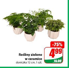 Rośliny zielone w ceramice @Dino