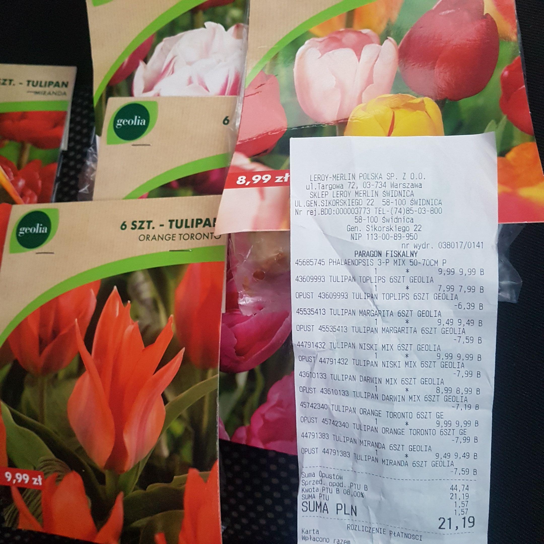 Cebulki kwiatowe -80% Leroy Merlin Świdnica
