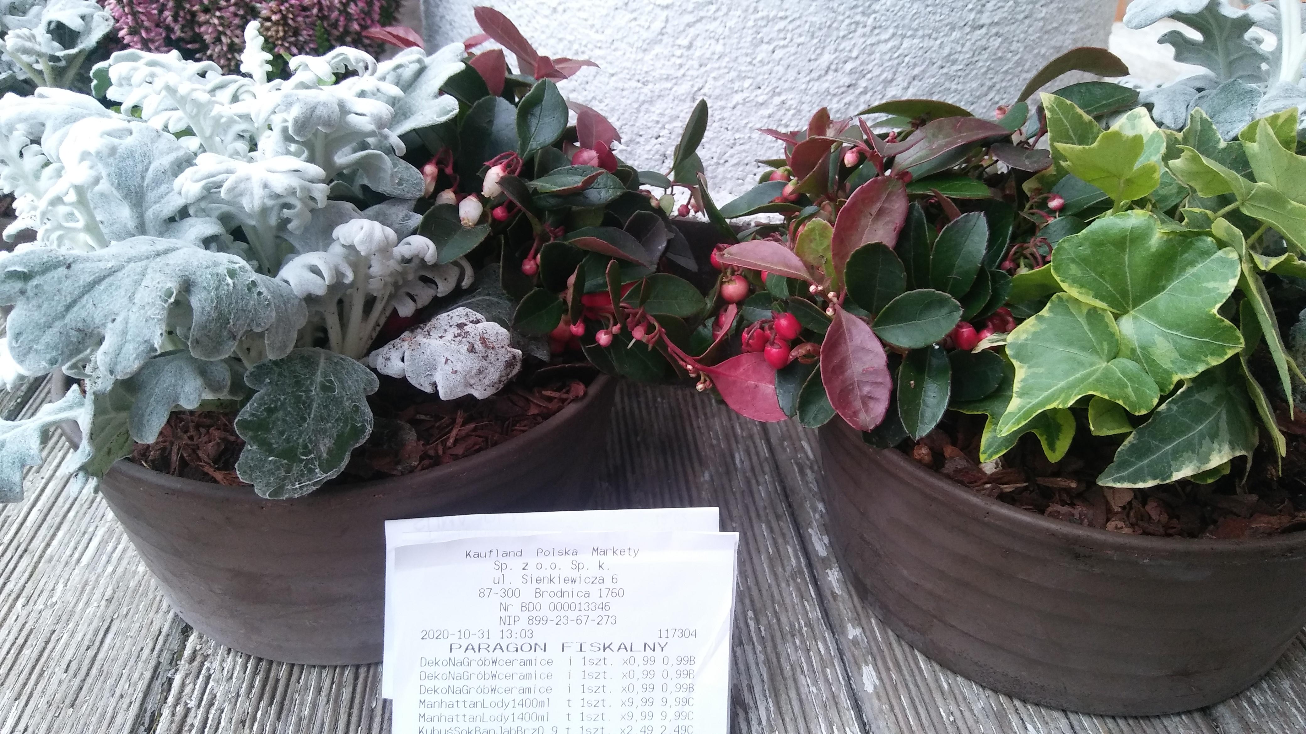 Kwiaty w ceramicznej doniczce @kaufland