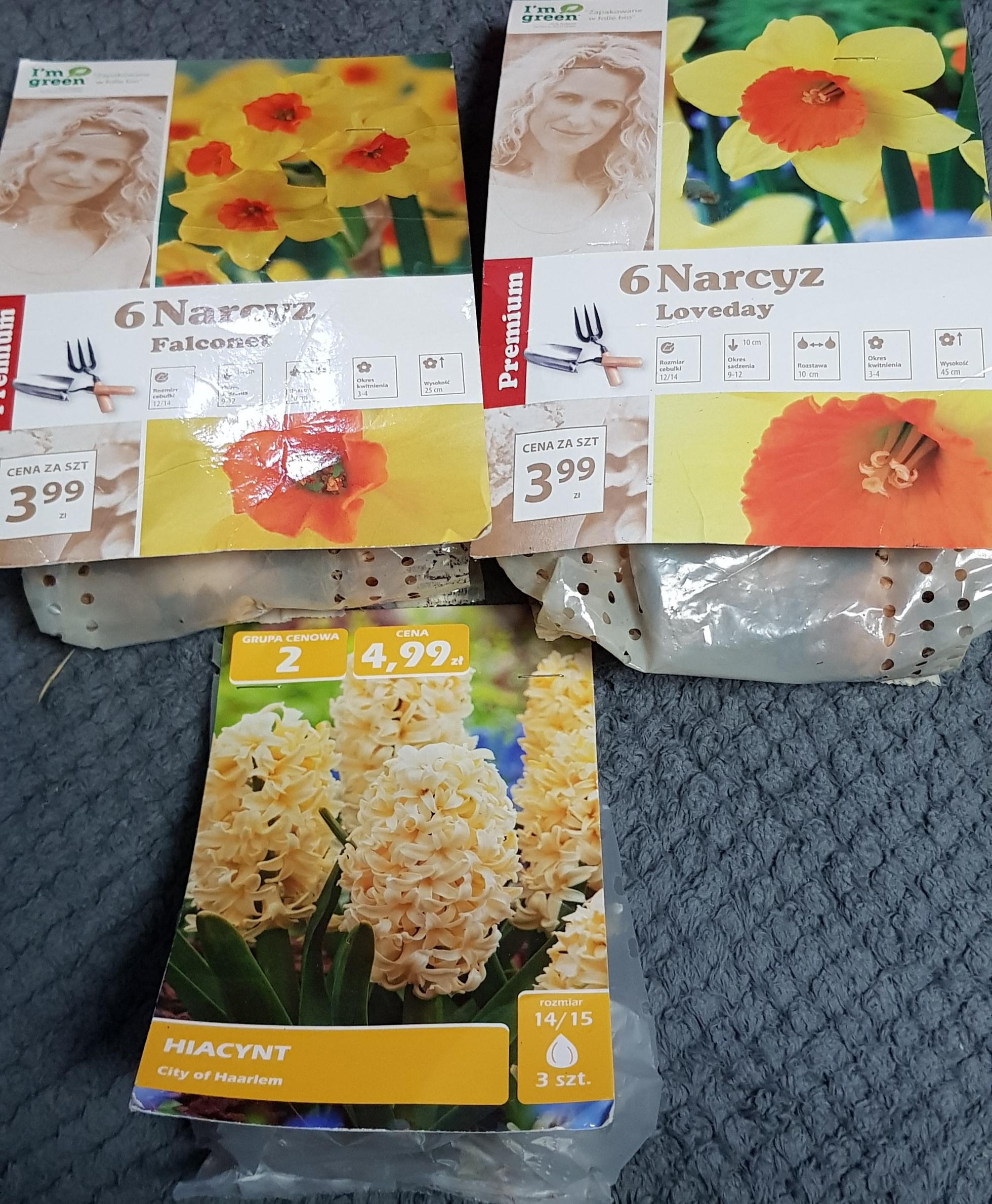 Cebulki kwiatowe narcyz - Biedronka