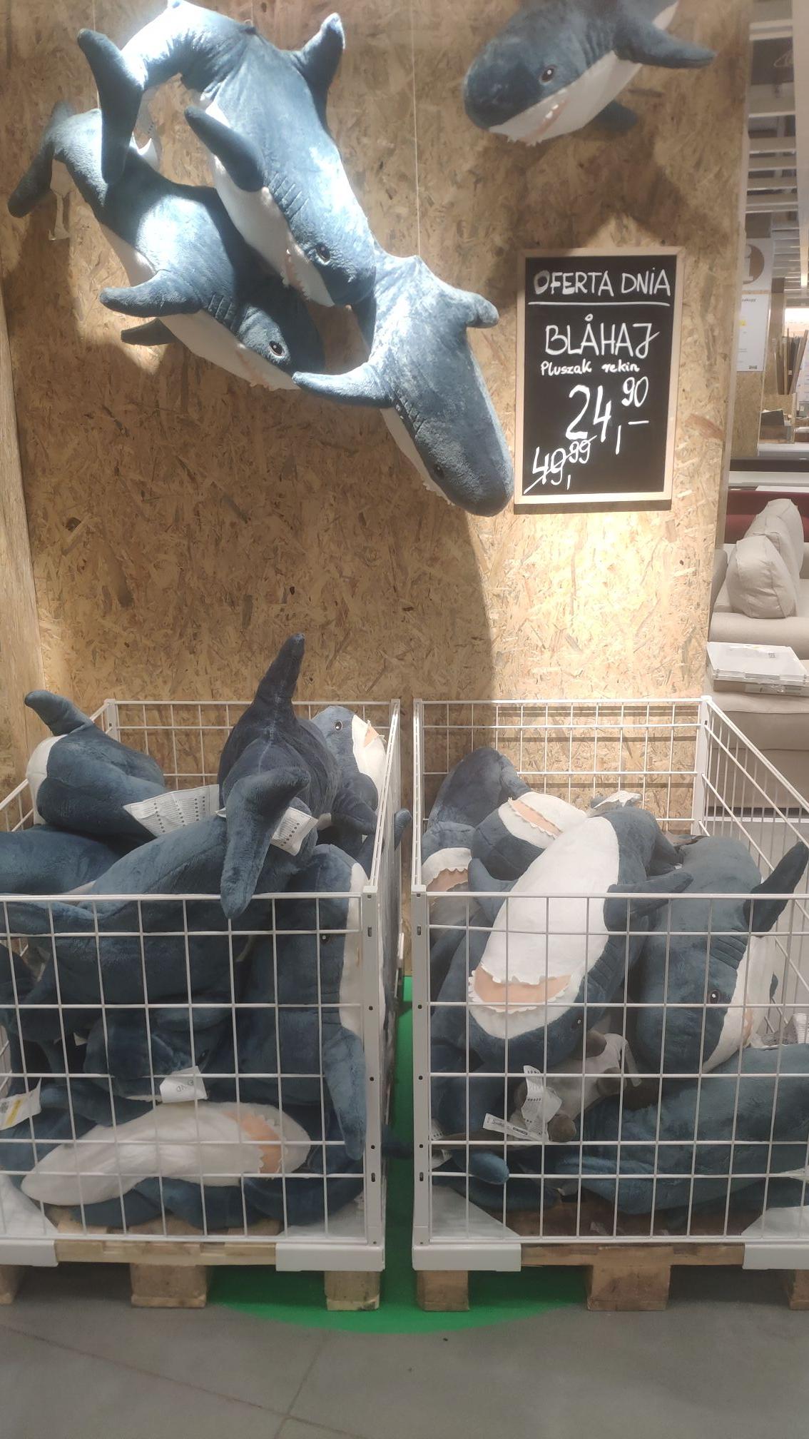 Rekin pluszowy IKEA BLAHAJ