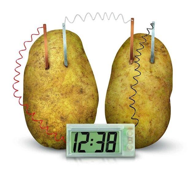 Nowoczesny Zegar zasilany ziemniakami