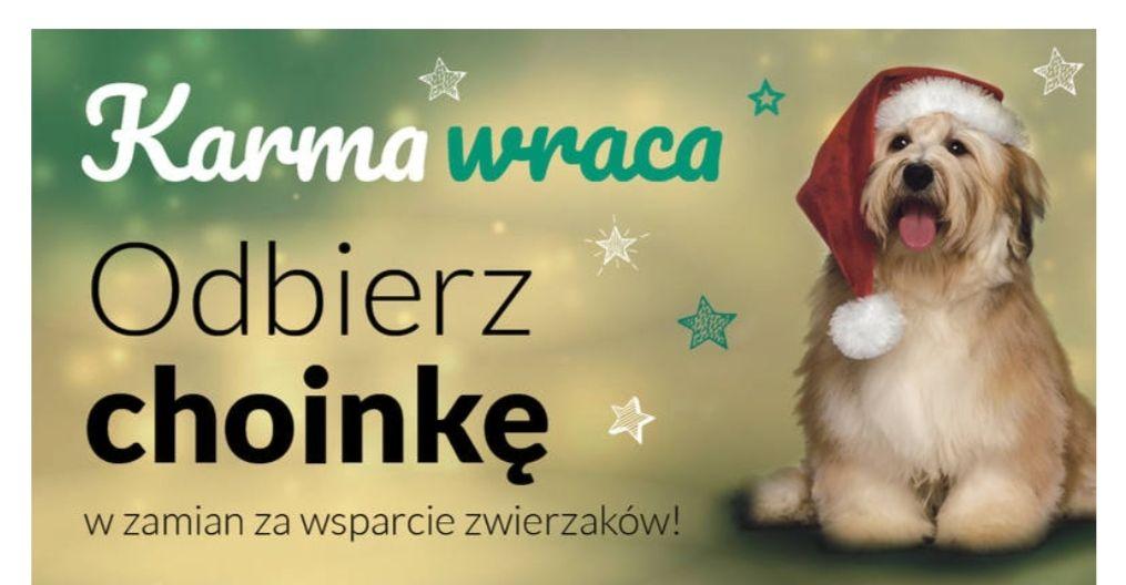 """Bydgoszcz """"Karma wraca"""", za wsparcie zwierzaków ze schroniska - świąteczne drzewko gratis."""