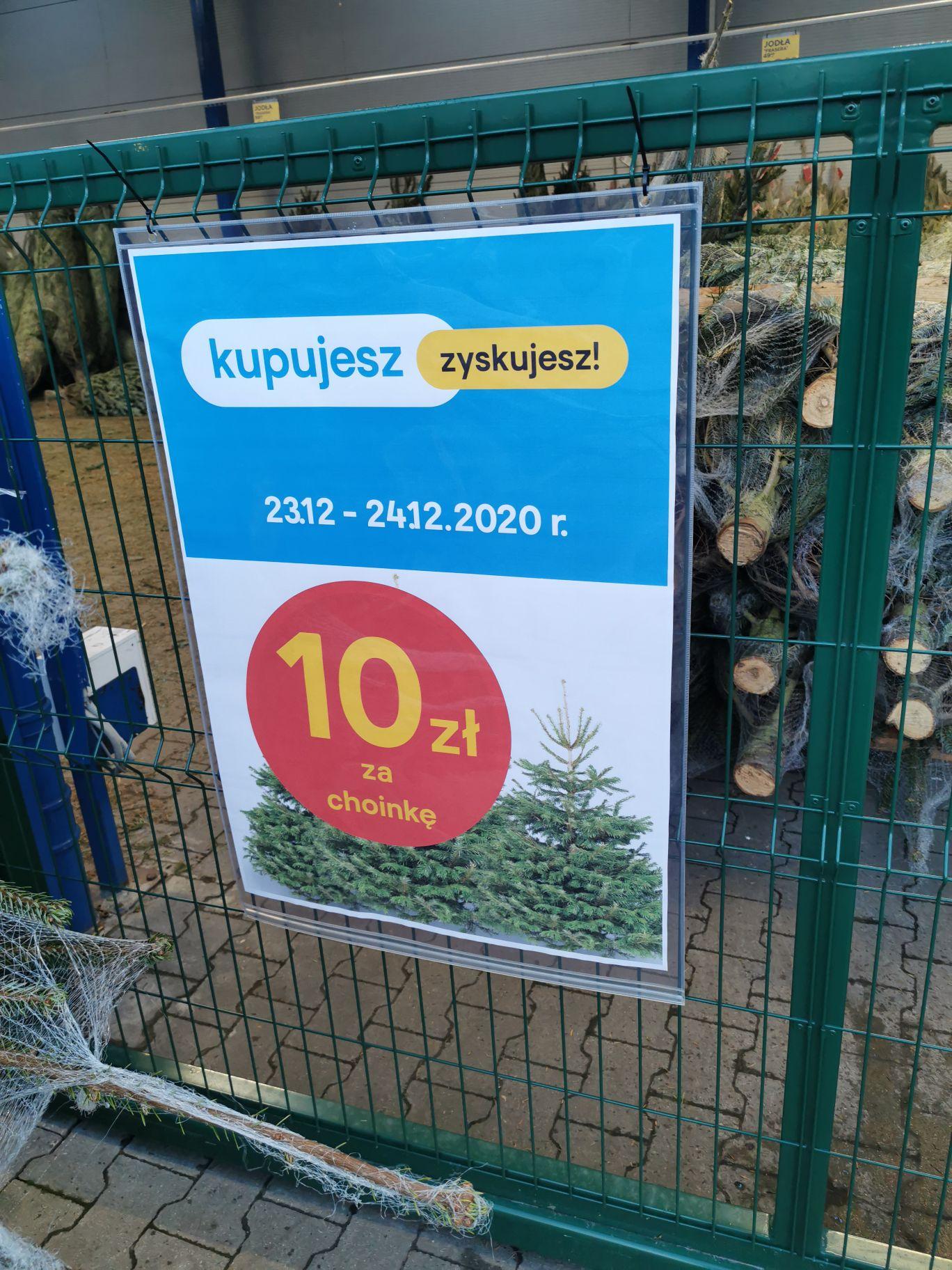 Żywe choinki w bydgoskiej Castoramie na Szubinskiej.