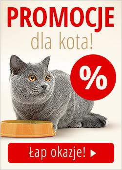 Darmowa karma dla kota
