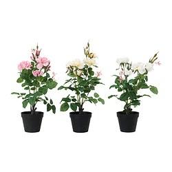 -15% na wszystkie sztuczne rośliny i kwiaty @ Ikea Family