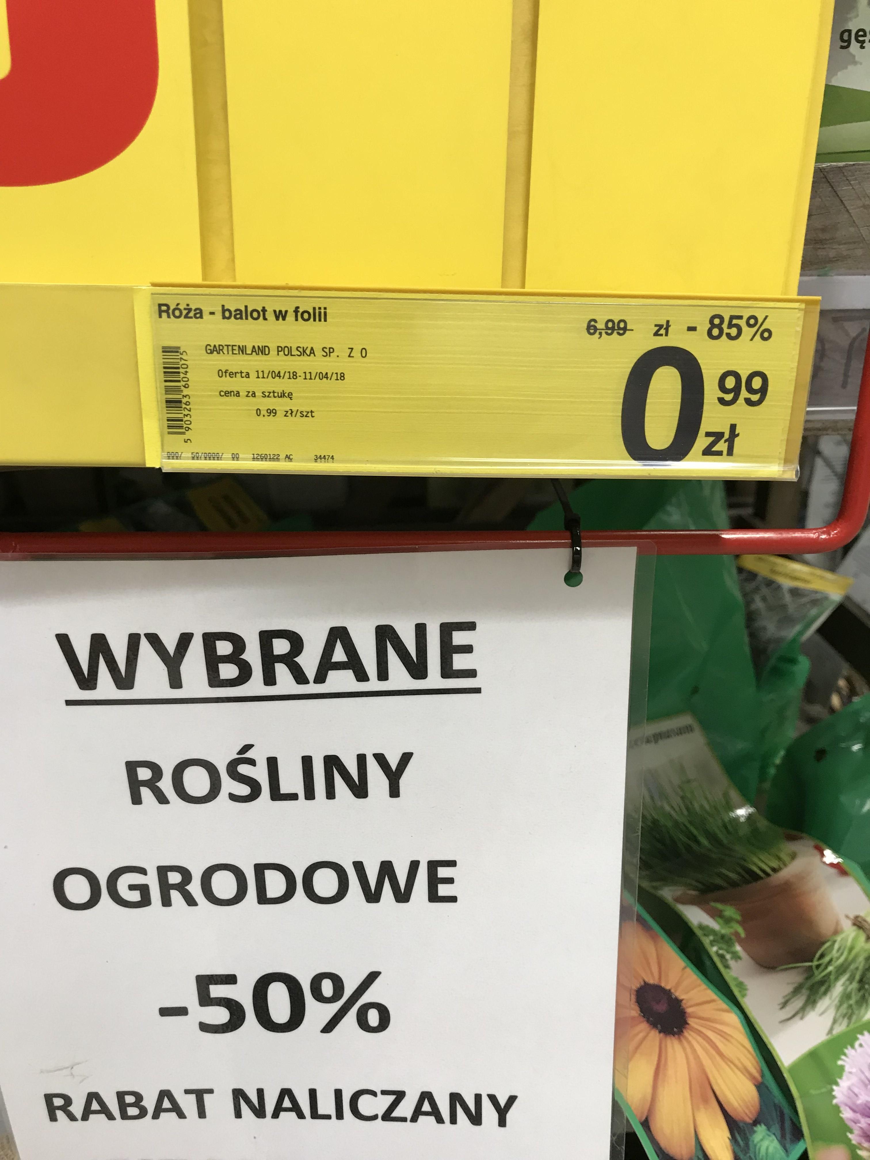 Róża balot w folii - Carrefour Warszawa