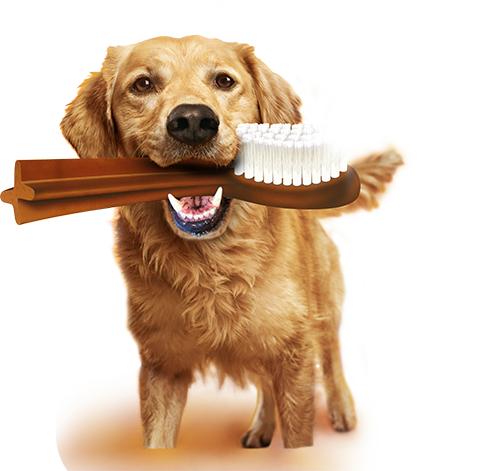 Bezpłatne badanie zębów psa w wielu miejscach w Polsce od Pedigree.