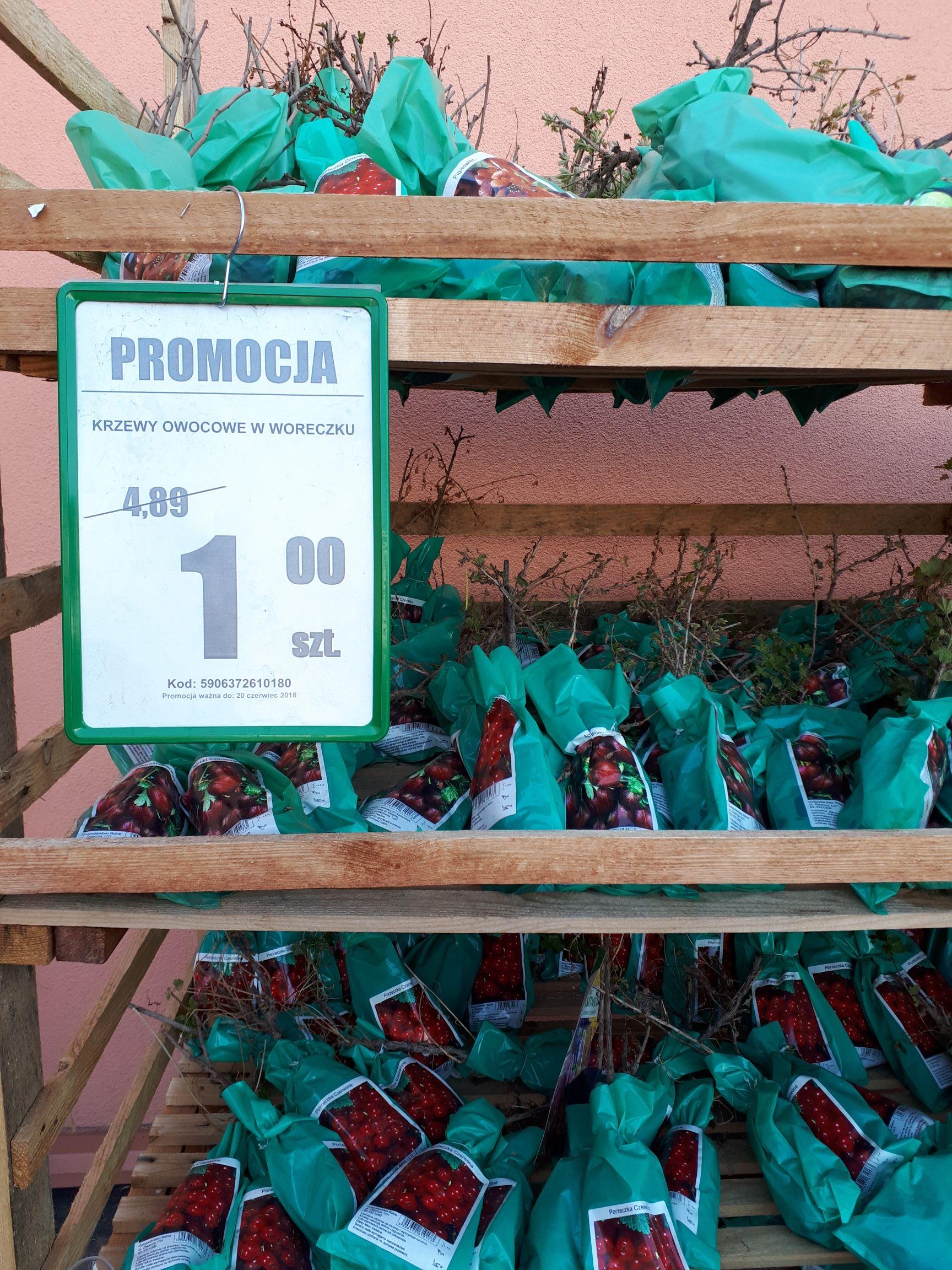 Auchan Katowice DTŚ duże przeceny krzewów