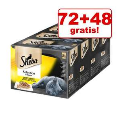 KARMA MOKRA DLA KOTA 72+48 gratis! Sheba Selection w sosie 120x85g