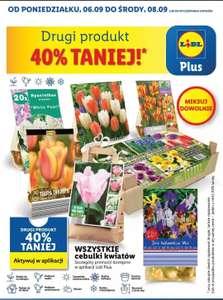 Cebulki kwiatów drugie opakowanie -40% Lidl plus