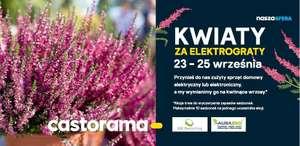 Kwiaty za elektrograty - Castorama