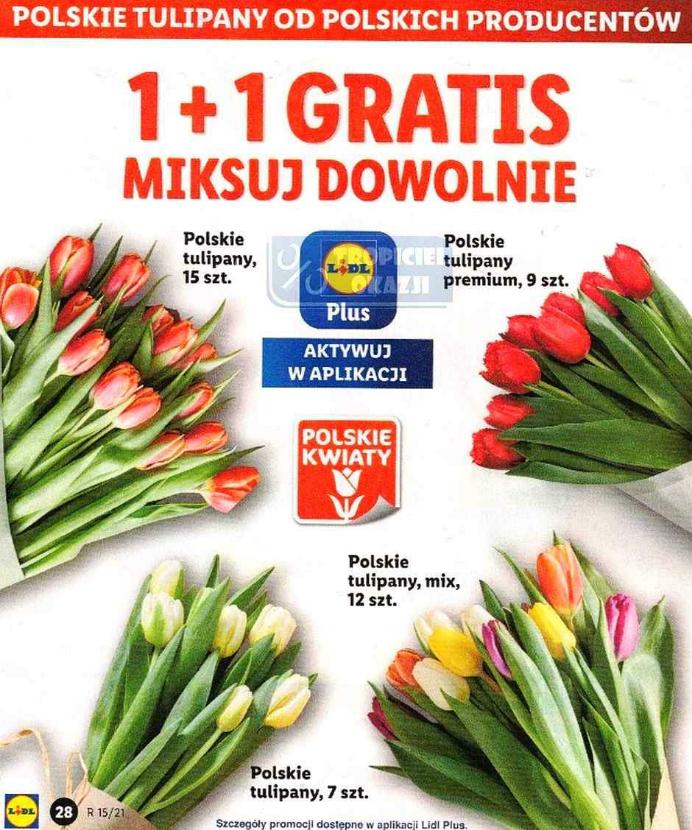 Tulipany od polskich producentów 1+1 GRATIS. Lidl
