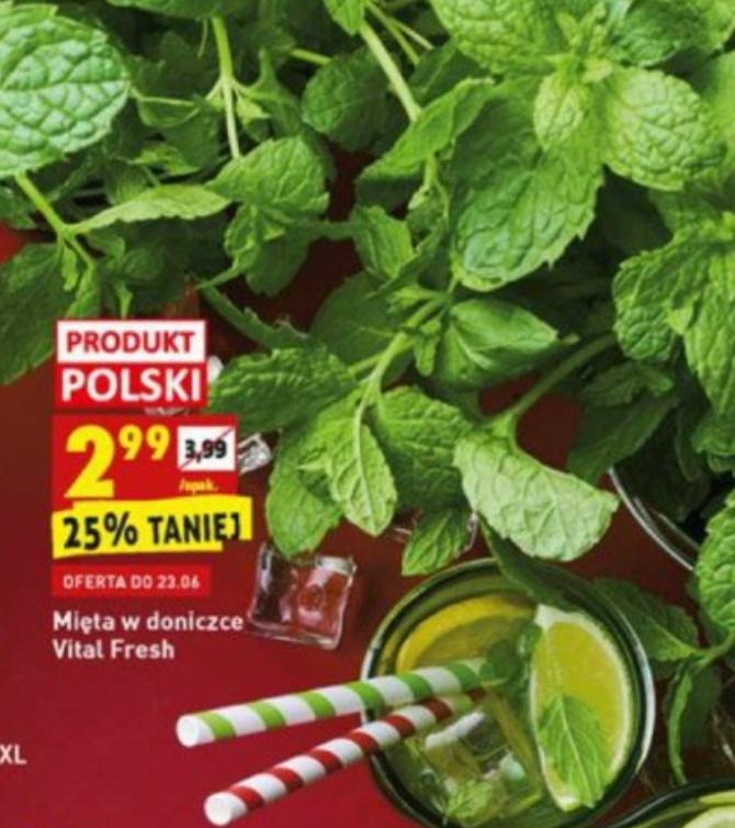 mięta w doniczce, Vital Fresh, 21-23/06, Biedronka